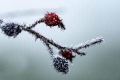 vinter kopiera