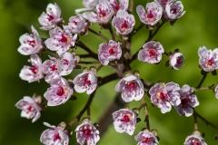 botaniska15-insta