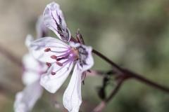 botaniska24-kopiera