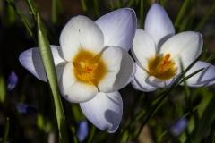 blomm1-insta