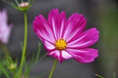blomma (2) kopiera