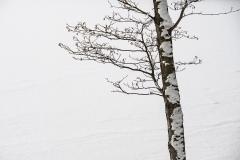 vinter17 hems